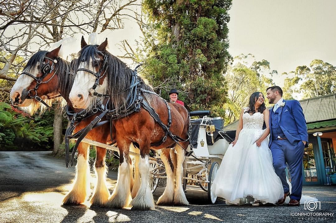 Weddings Horse Drawn Carriages