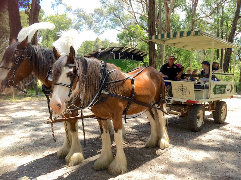 Kids Party Horse Carriage rides