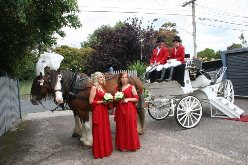 Aroretum Wedding Reception Horse Drawn Carriage