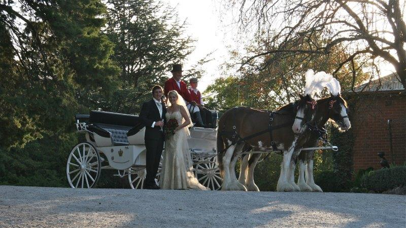 Home Weddings Horse Drawn Carriage