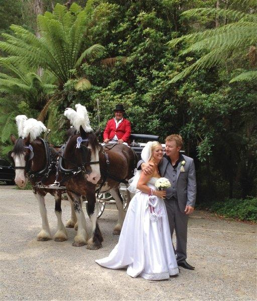 Dandenong Ranges Wedding Horse Drawn Carriage