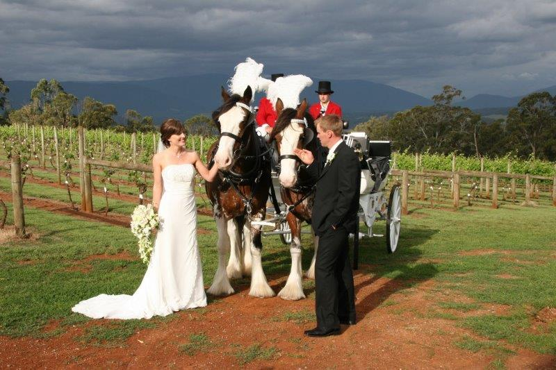 Elmswood Wedding Horse Drawn Carriage