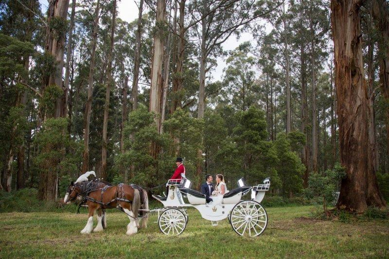 Home Weddings Horse Drawn Carriage