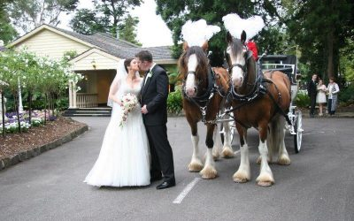 Bram Leigh Reception Horse Drawn Carriage