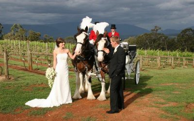 Elmswood Estate Wedding Horse Drawn Carriage