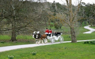Marriage Proposals – Horse Drawn Carriages