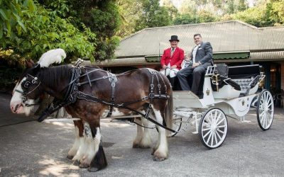 Nathania Springs Receptions Weddings Horse Drawn Carriage