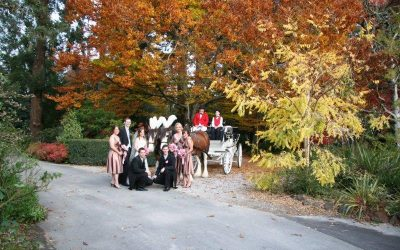 Poets Lane Weddings Horse Drawn Carriage