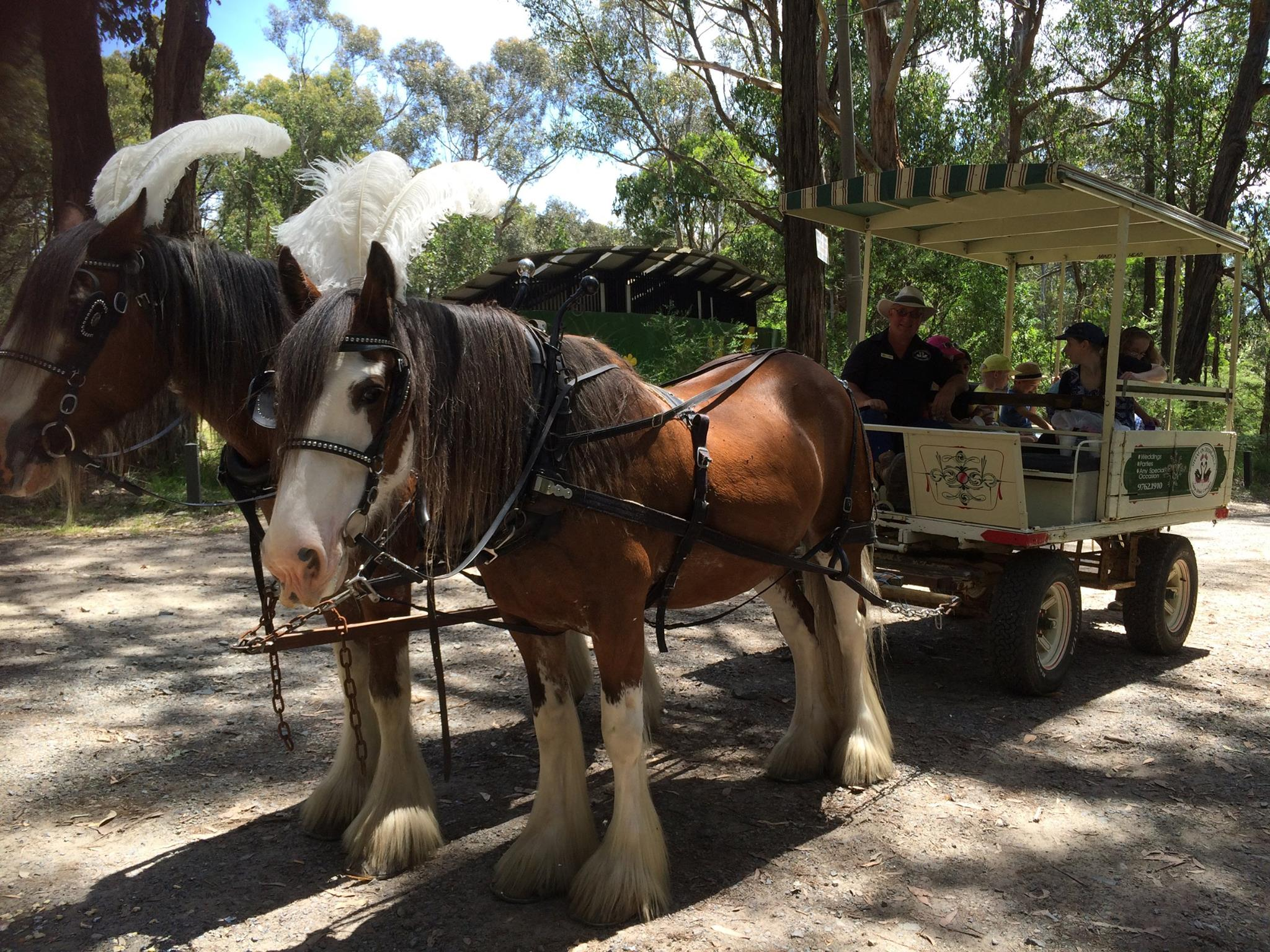 Horse Drawn Carriages Events