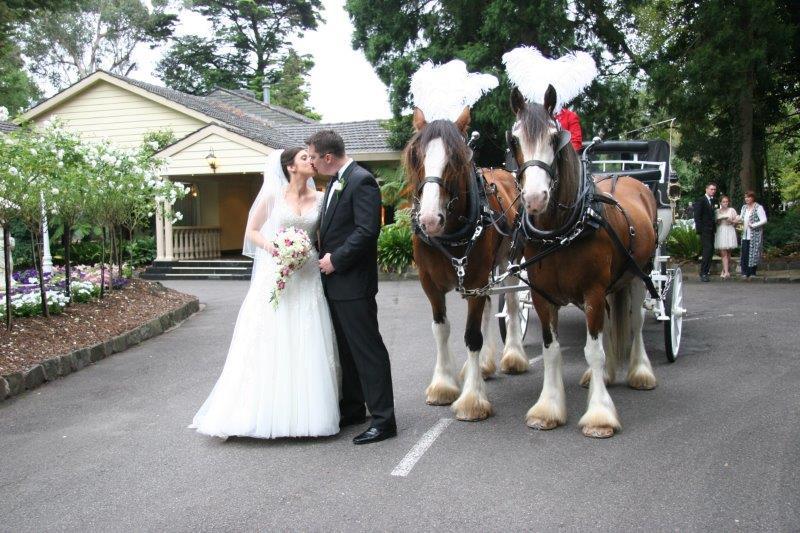 Bram Leigh Reception Horse Drawn Carriage