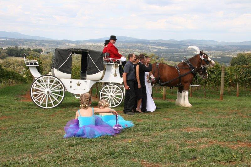 Elmswood Wedding Horse Drawn Carriage