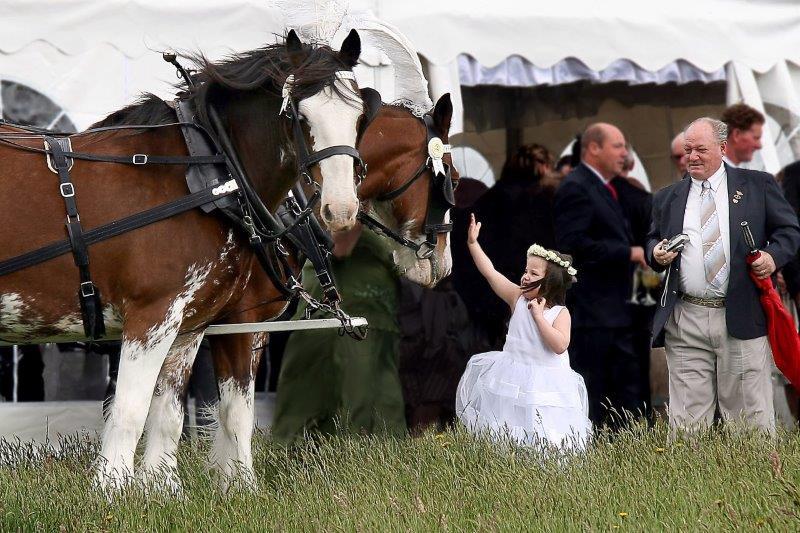 Gum Gully Wedding Horse Drawn Carriage