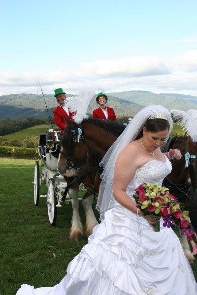 Killara Estate Wedding Horse Drawn Carriage (1)