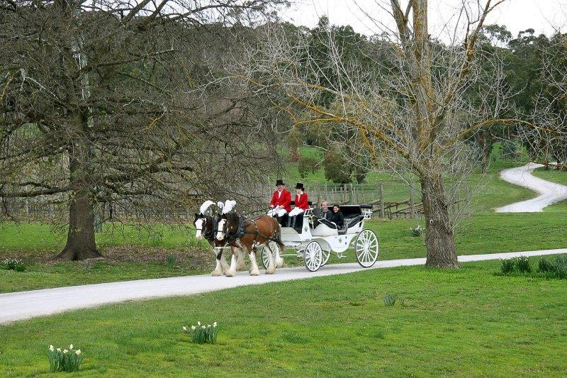 Marriage Proposals - Horse Drawn Carriages