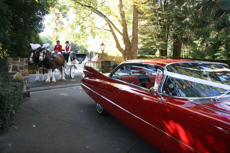 Marybrooke Weddings Horse Drawn Carriage