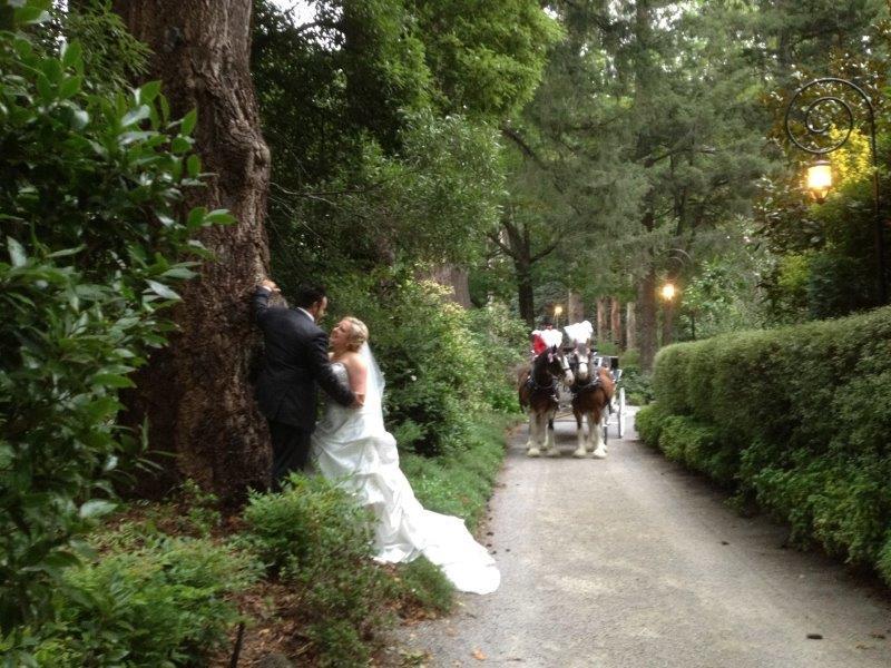 Poets Lane Weddings Horse Drawn Carriage