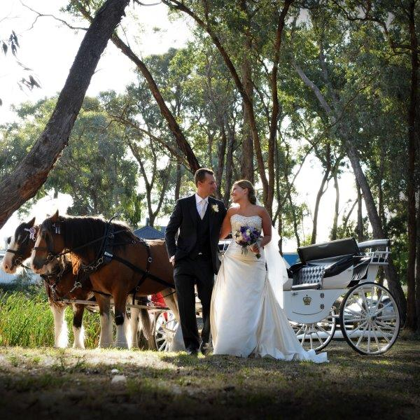 Potters Wedding Reception Horse Drawn Carriage